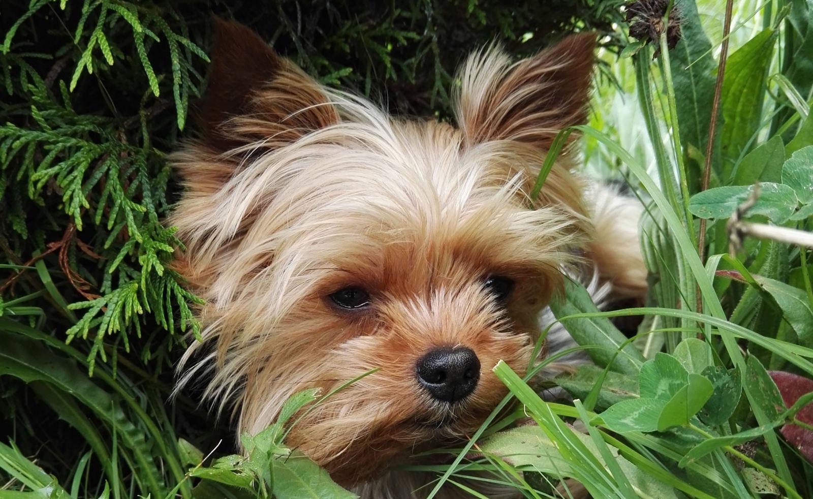 Oznámení o očkování psů proti vzteklině