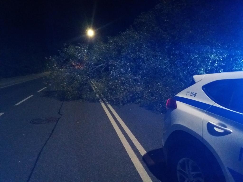 Spadlý strom na Polské ulici