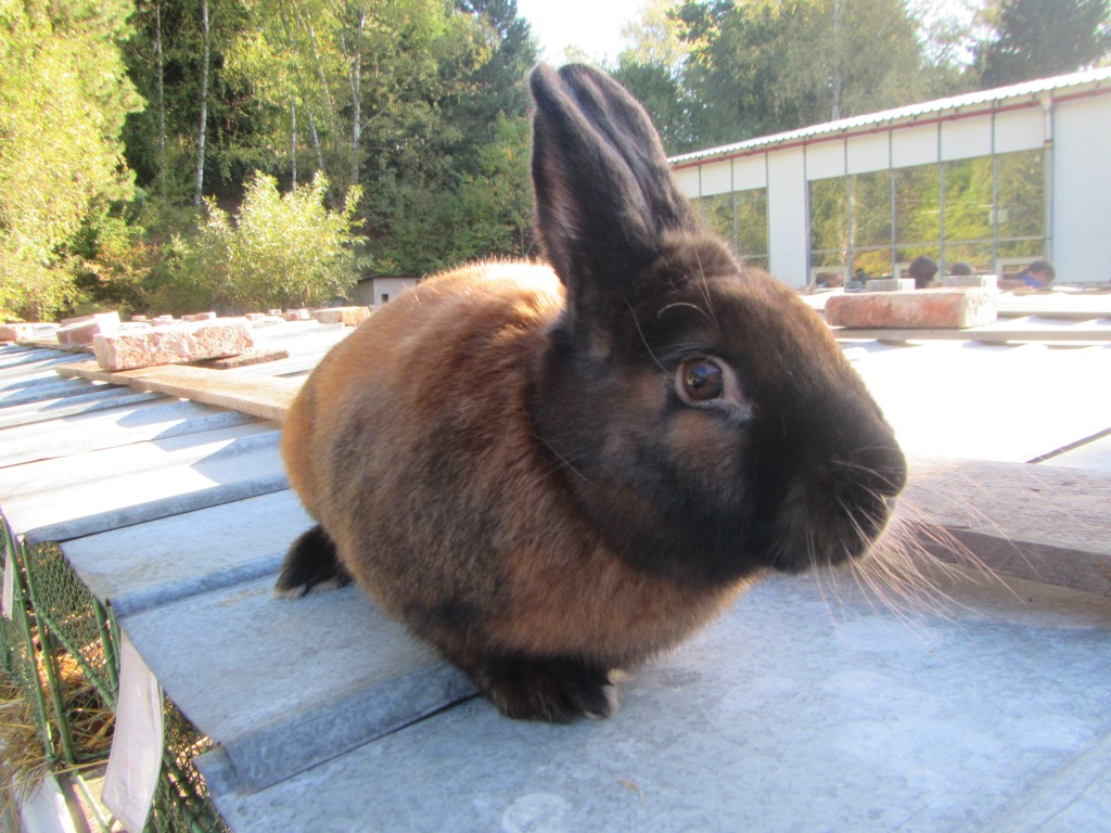 Okresní výstava králíků, holubů a drůbeže