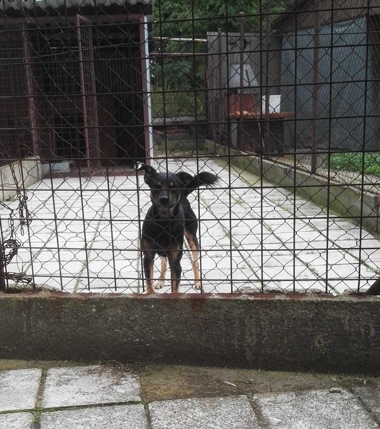 Zatoulaný pes - nikdo se o něho nepřihlásil, byl převezen do útulku