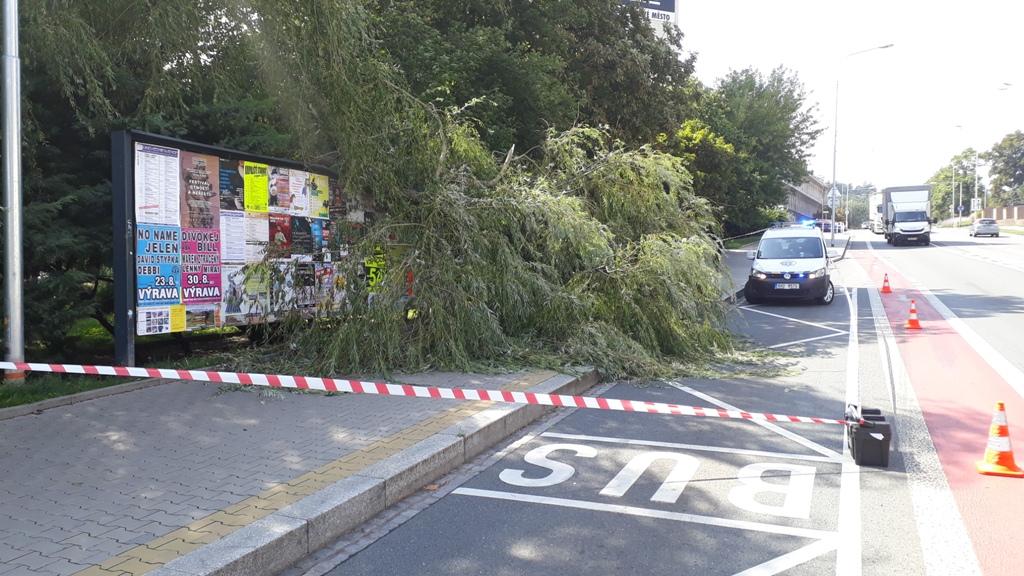 Ulomená větev spadla na chodník