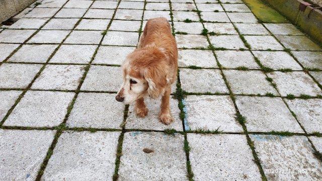 Nález psího seniora - JE DOMA, MAJITEL SE PŘIHLÁSIL.