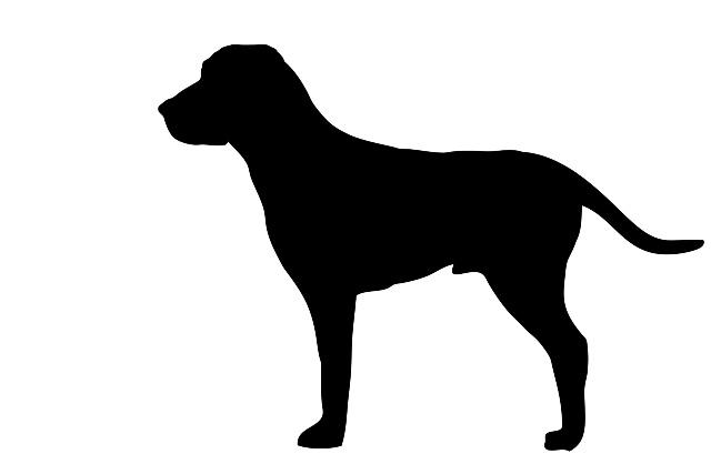 Databáze ztracených a nalezených psů na internetových stránkách SVS