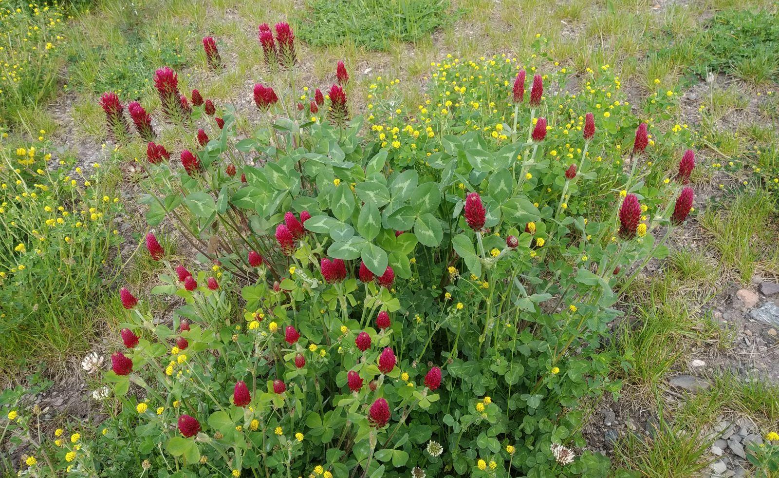Sečení trávy – jak probíhá vNáchodě?