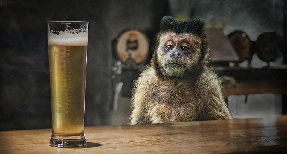 """Cizinec si po noční směně pořídil """"opičku""""."""