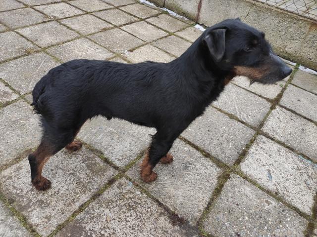 Další nalezený pes.