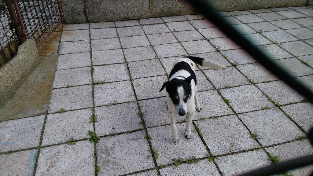 Nález psa - kříženec. Je doma. Pro pejska si přijeli majitelé ze 40 kilometrů vzdáleného polského Mieroszowa.