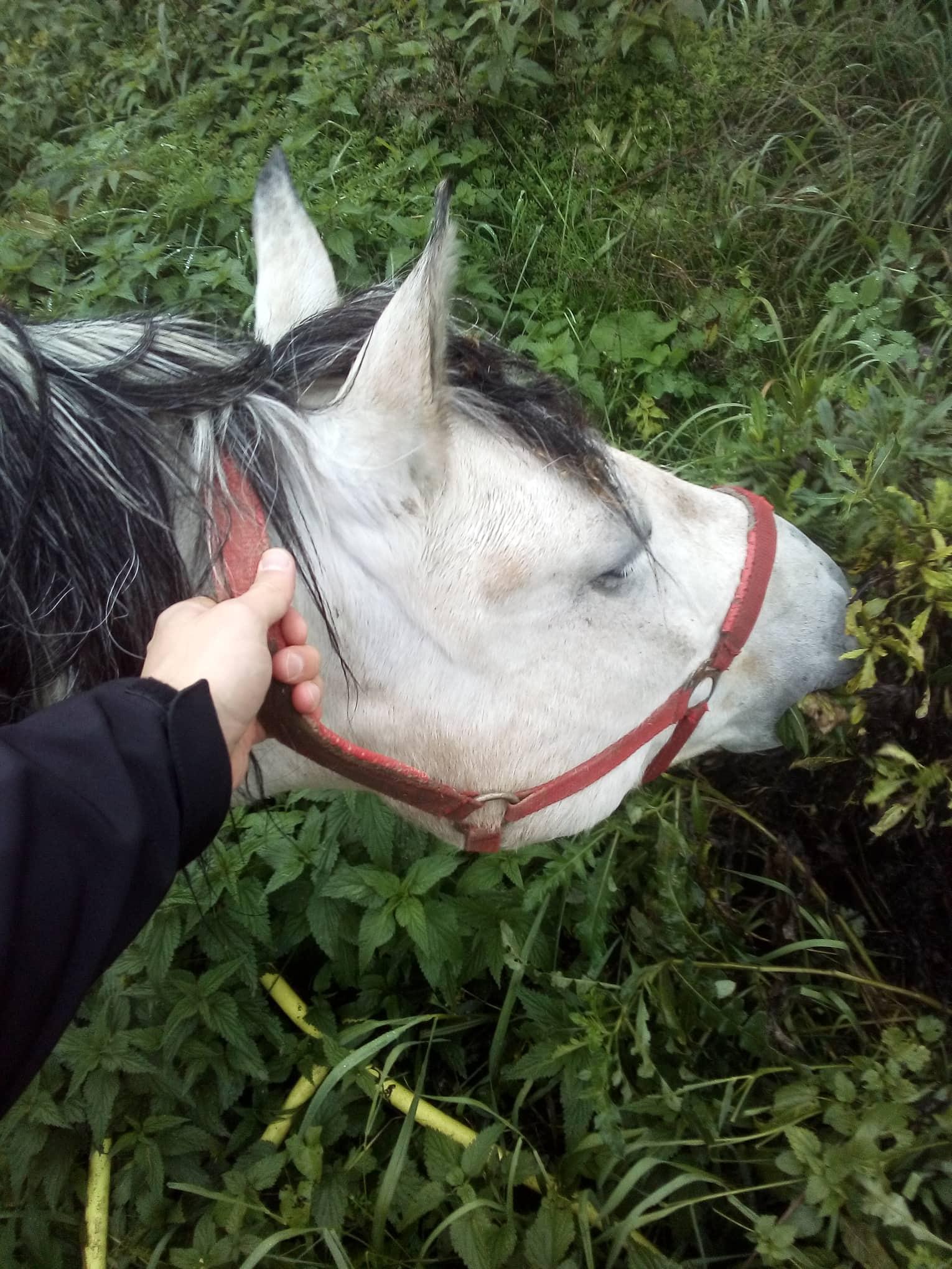 Koně na komunikaci